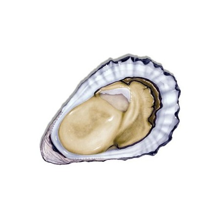 http://www.finestgourmetfood.co.uk/101-234-thickbox/25-rock-oysters-fresh-no1.jpg