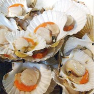 Frozen Queen Scallops in Shell 2Kg
