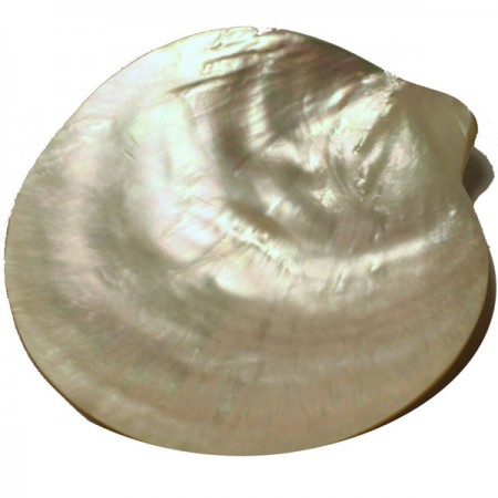 http://www.finestgourmetfood.co.uk/25-112-thickbox/mother-of-pearl-plate-6.jpg