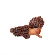 Dried Small Morels 100g